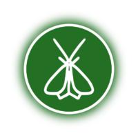 Motten und Käfer