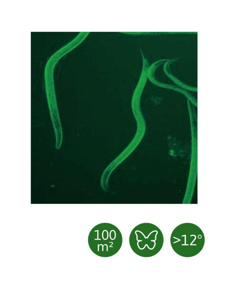 HB-Nematoden nematop® gegen Dickmaulrüssler und Engerlinge, für 100 m²